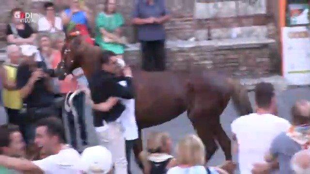 骑手和马匹都受到热烈欢迎
