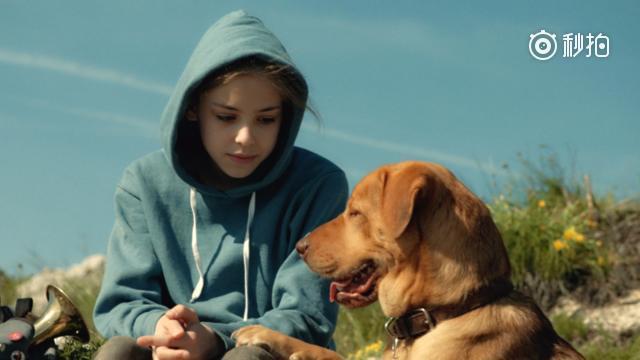 女孩的爱犬被父亲遗弃,再见时它却不认女孩,一首曲子拯救了他们