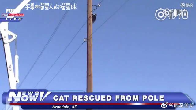 消防员正在营救一只被困在电线杆上的猫咪,没想到啊