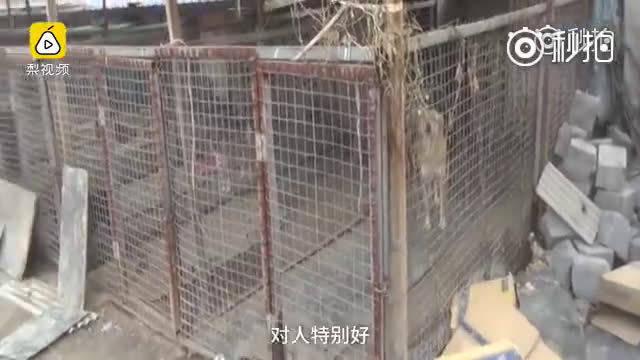 大妈冲入火场救流浪狗:被烧伤半边脸,曾为养狗卖一套房