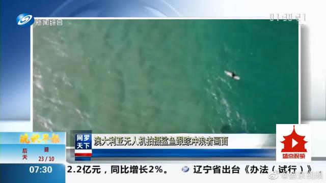 澳大利亚无人机拍摄鲨鱼跟踪冲浪者画面