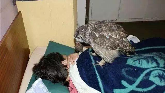 猫头鹰连续四年给救命恩人送礼物,只是这大礼让人哭笑不得