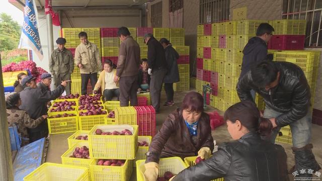 秦州区汪川镇:做大做强林果产业 拓宽群众致富渠道