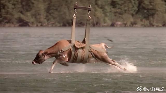 小镇的湖里出现怪物,为了抓住它,科学家用一头活牛当诱饵