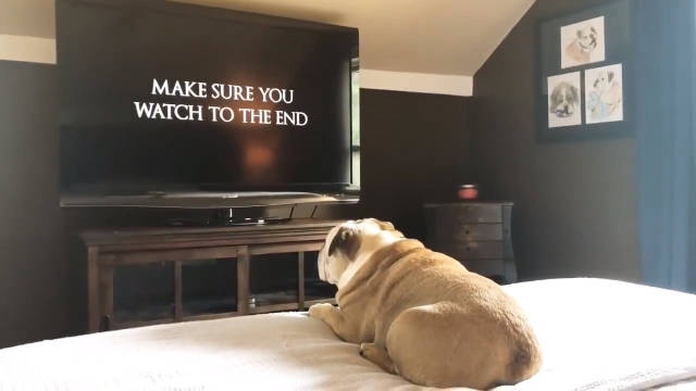 给狗狗看恐怖片后,它回头的那一幕把我吓坏了!