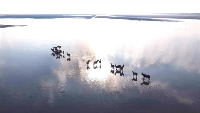盐城大丰麋鹿自然保护区惊现天空之境