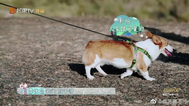 携爱犬参加节目,吴刚小丸子怕狗一秒变怂,这怂的彻彻底底!