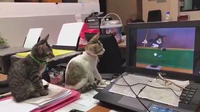 认真看动画片的两只喵星人!萌死了!