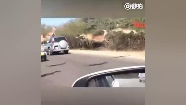 卧槽!鹿能跑这么快啊!!鹿:别说跑。。。我都能飞。。。
