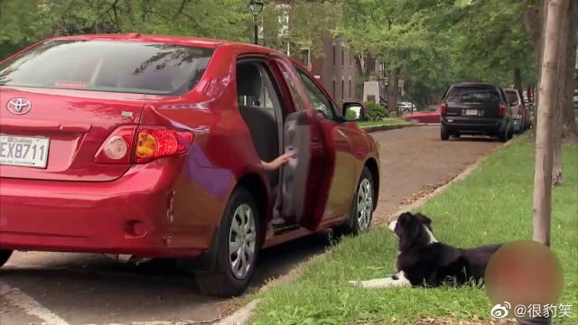 恶作剧:街头现偷狗贼,主人转个身狗就被偷