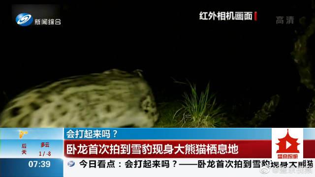会打起来吗?卧龙首次拍到雪豹现身大熊猫栖息地