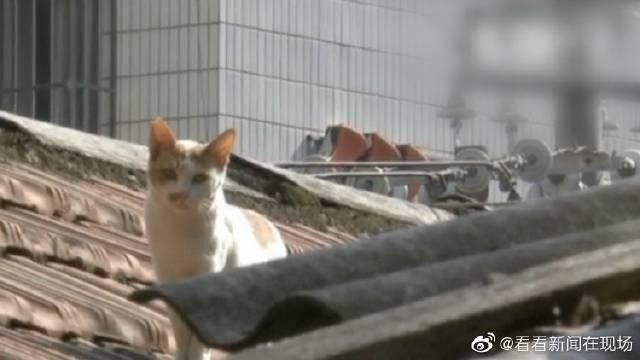 这水有问题?流浪猫相继死亡 居民怀疑遭人投毒