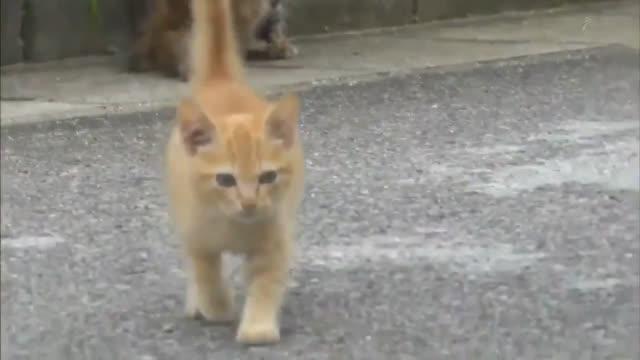 日本一位动物摄影师在拍摄的时候,突然遇到一只凶狠的动物