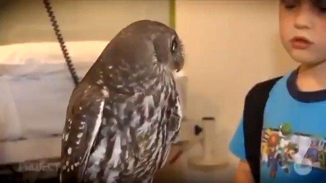 【行走·趣闻】突然间领悟了世间奥秘的猫头鹰君
