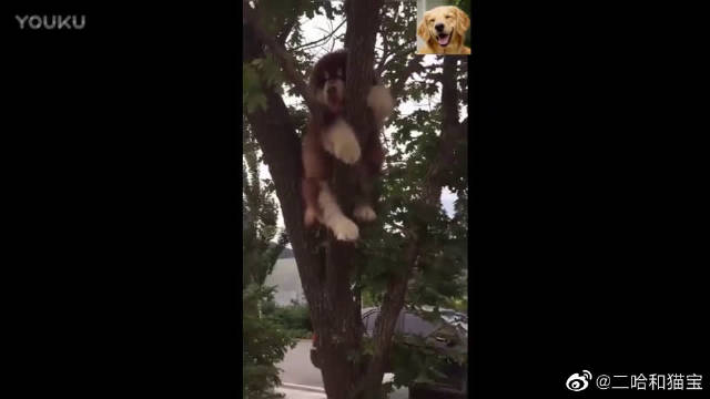 被挂在树上的阿拉斯加宝宝, 求狗狗的心理阴影面积