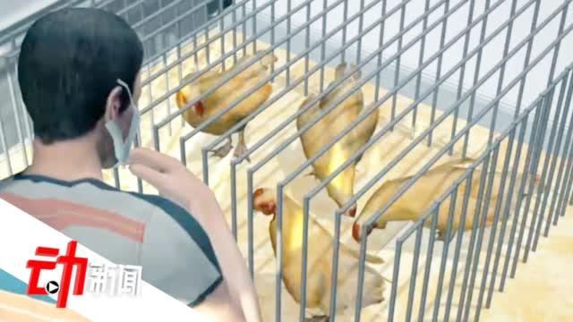 四川发生家禽H5N6亚型高致病性禽流感疫情 该病毒仅偶尔感染人类
