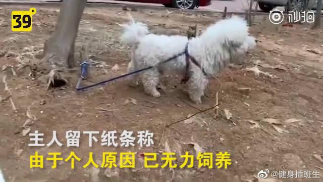 抗疫期间一只宠物狗被遗弃,见到救助者,它做了一个动作