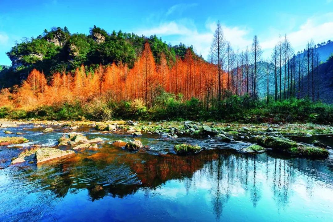 国家首批,全省唯一!这个蛰伏于茅山脚下的森林小镇,南京出发只要1.5h!图片