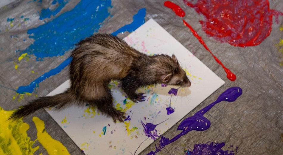 """美奥克兰动物园拍卖动物画作 """"画家""""包括大象和蟑螂(组图)"""