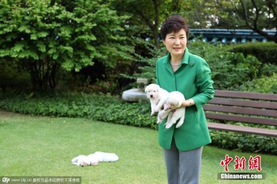 当地时间2015年9月20日,朴槿惠在脸书上发布爱犬照片。图片来源:CFP视觉中国