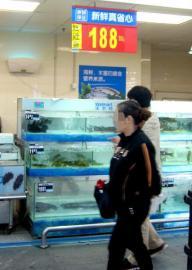 超市公开卖娃娃鱼 手续不全被叫停