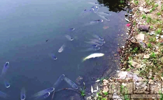 抽烟女囹ki9��_湖南烈士公园跃进湖现大量死鱼 系气温骤降导致