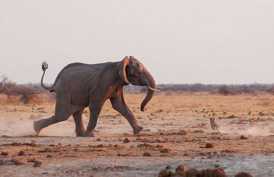 非洲国家的代表动物