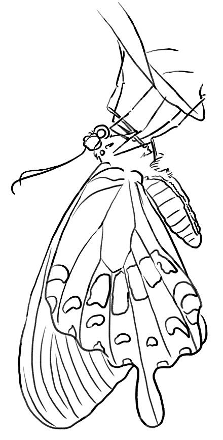 蝴蝶简笔画 步骤图解