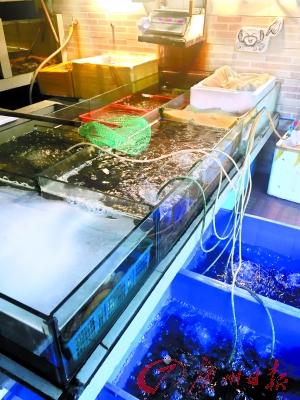 生蚝餐厅的海鲜池。