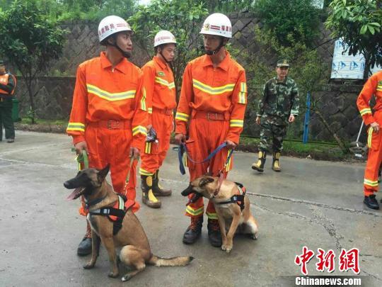 福州消防支队两条搜救犬已进入滑坡核心区展开搜救。 福州消防支队 摄