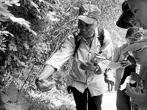 动物教授舒志坚毅刚烈在教孩儿们意识蝎子草。因为手掌没有毛孔,能够用手掌接触蝎子草;手背毛囊丰盛,一旦碰着,就有被蝎子蜇的痛苦感。北京晨报记者 史春阳/摄