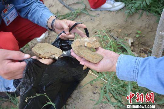 图为工作人员展示采摘的野生蘑菇。 谭辉 摄