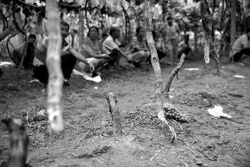 村民几万棵葡萄树被连夜砍断 疑与拆迁有关