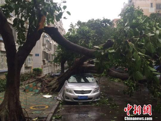 吹折的大树压住车辆。 陈悦 摄