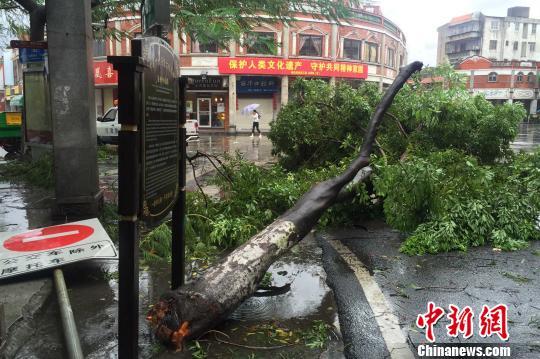 9月15日,福建泉州市区百年中山路上,树木、路牌被巨风刮断。 孙虹 摄