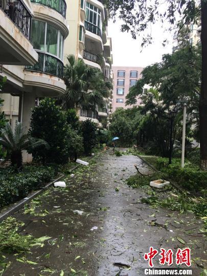 小区到处是被台风吹落的物体。 陈悦 摄