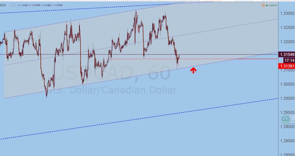 张鑫:今日商品货币,你怎么看?|交易|技术面