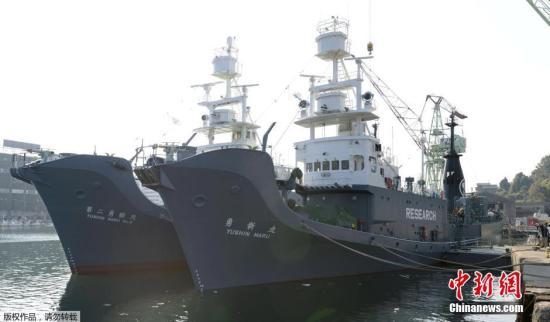 日本南极海域科研捕鲸船队启程 遭相关团体反对