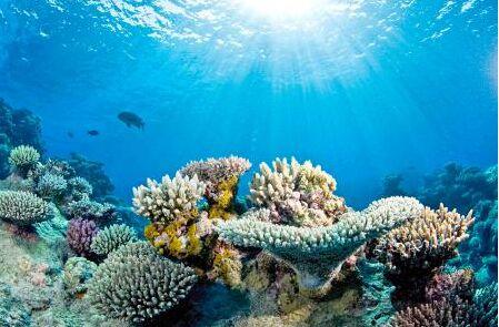 全球变暖致珊瑚礁惨遭破坏 海水酸化将使多国严重受损