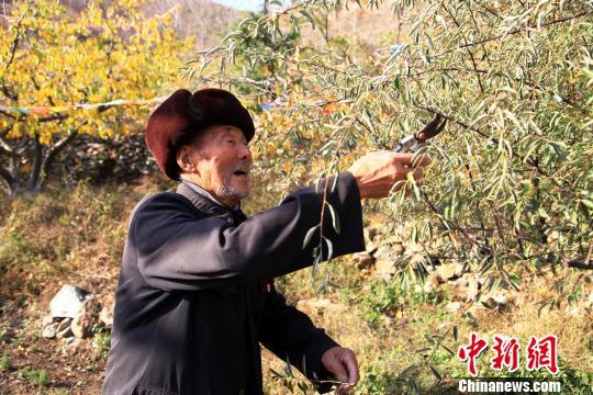 """山东老人25年种10万棵树 """"植绿""""一座山(图)"""