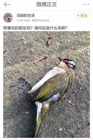 网友发布捕鸟照被国家林业局官微批评 警方介入