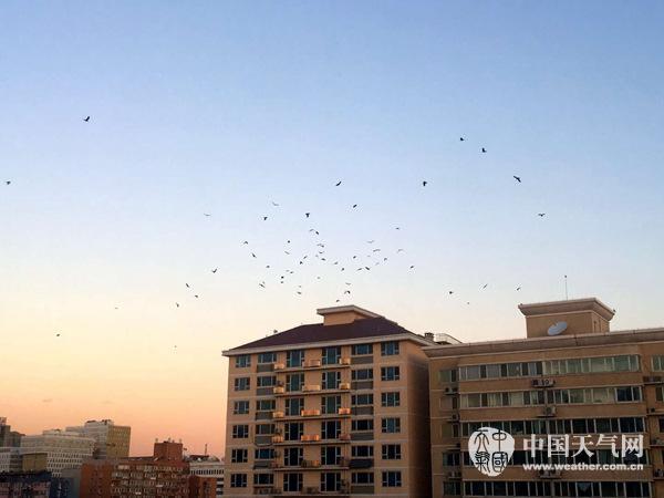7日早晨,北京天空�沉,�w�B擦�^天涯。(�w嫣嫣 �z)