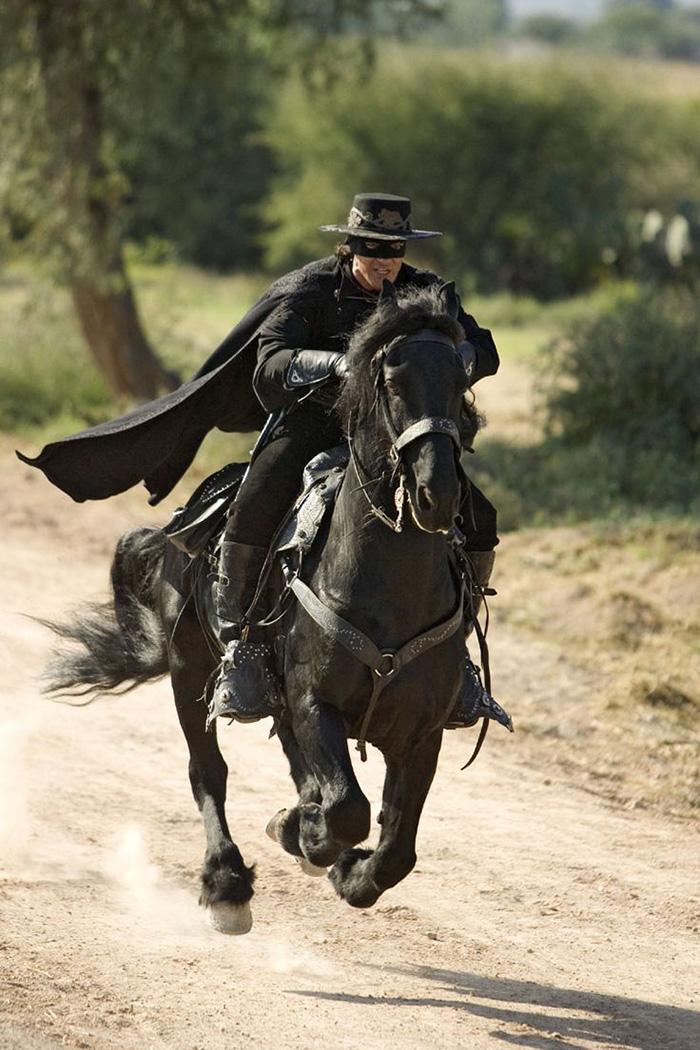 ... 荷兰皇家弗里斯兰马协会,带你看世界上最帅气的马