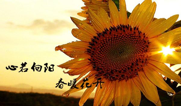 金沙澳门官网-www.js9900.com-金沙澳门官网网址 3