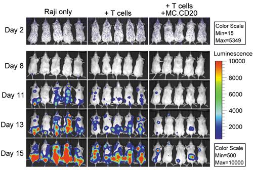 深圳先进院用非病毒基因载体技术治疗B细胞淋巴瘤获进展