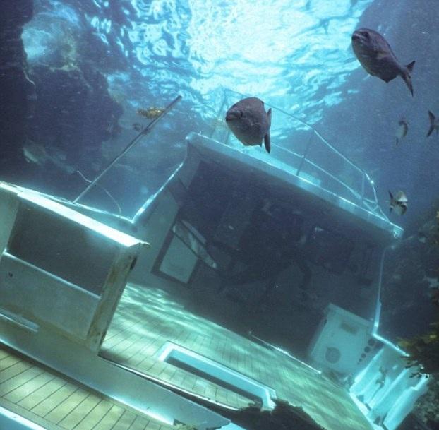 澳豪华游艇沉没海底被鱼儿当成家