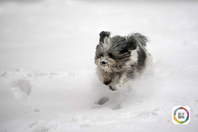 好大雪!欧洲遭遇寒潮侵袭