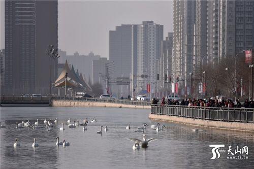 今年春节期间,库尔勒市天气晴朗,从大年初一开始,杜鹃河畔就吸引了