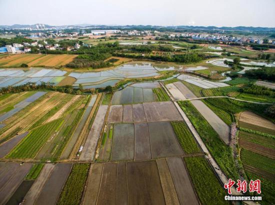 资料图:广西柳州市一处耕地。 黄威铭 摄
