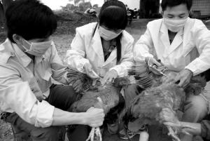 1月份全国192例人感染H7N9禽流感